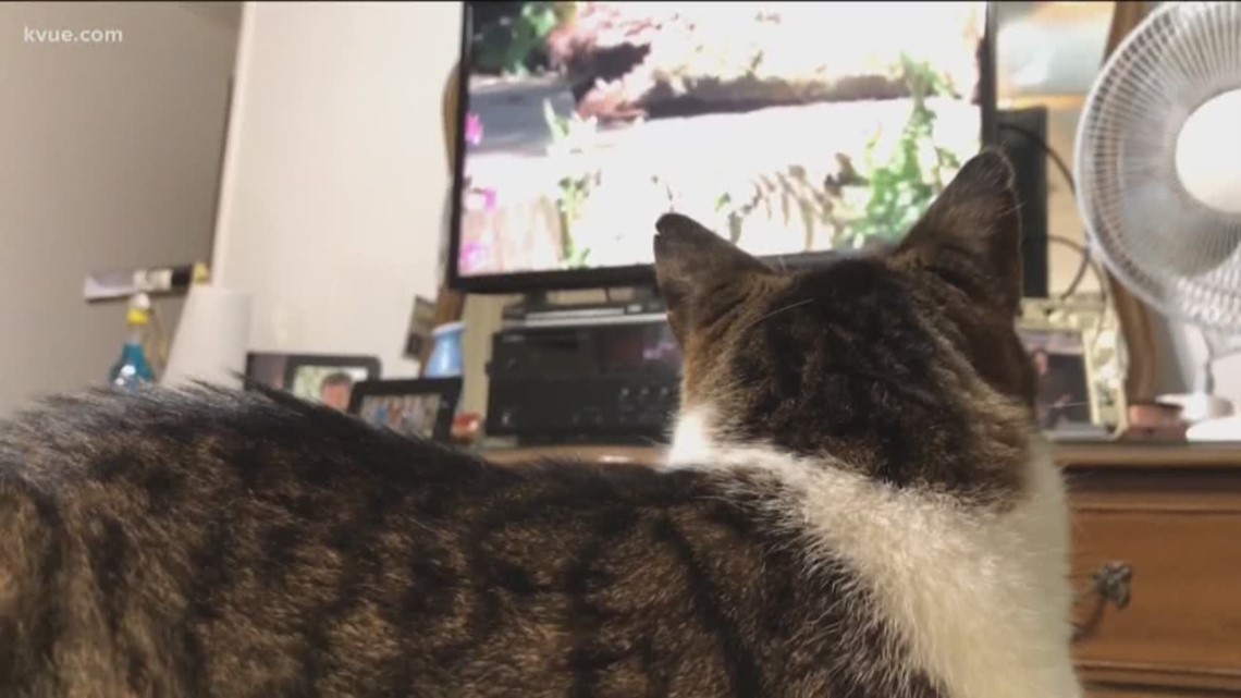 Does It Work: Cat TV videos to entertain your cat