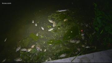 Wastewater spill kills fish in Pflugerville