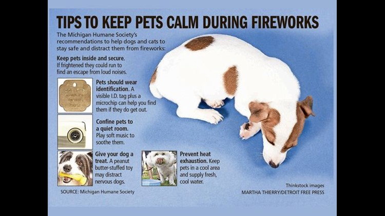 How to comfort your pets during fireworks shows