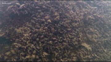 Is there a solution to the zebra mussel problem in Central Texas?