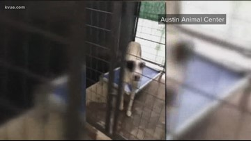 Austin Animal Center now out of space