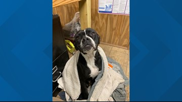 Dog transferred nearly 200 miles to Austin to be rescued from abuse, shelter says