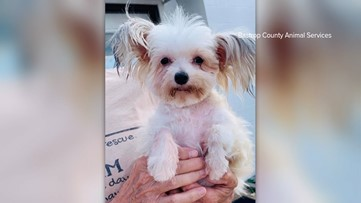 Bastrop animal shelter has small hypoallergenic dogs up for adoption