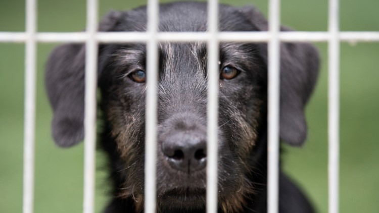 Williamson County Regional Animal Shelter cuts most adoption fees amid surge