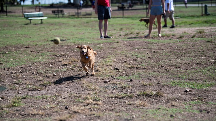 Members-only dog park and cafe coming to South Austin