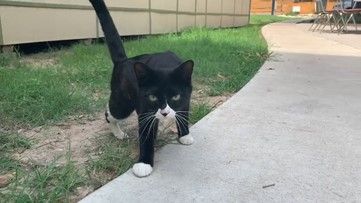 It's 'kitten season.' Here's what to do if you see stray kittens in your yard