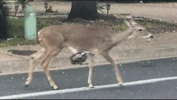Neighbors call for help after finding deer being hunted in their neighborhood