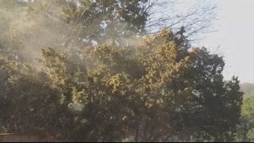 Austin cedar fever: Here are the symptoms you need to know
