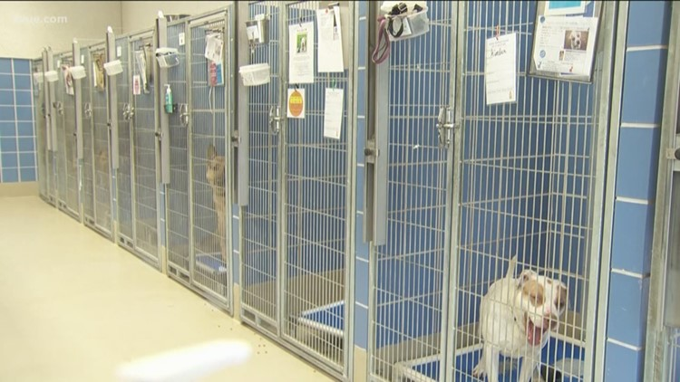 Austin Animal Shelter asking for fosters