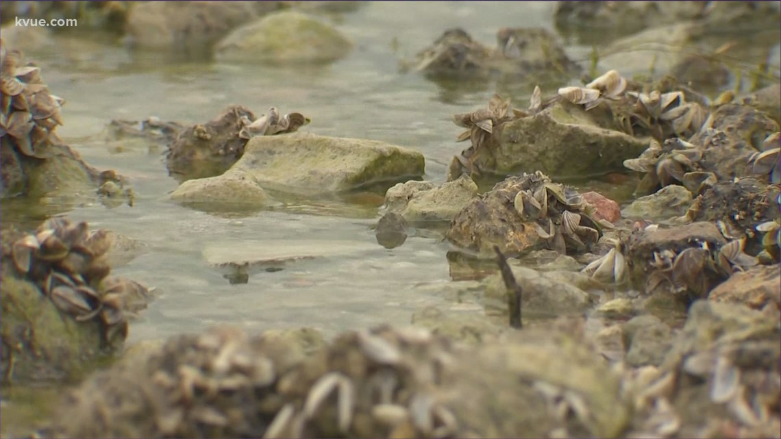 Three Austin Lakes designated as fully 'infested' with zebra mussels