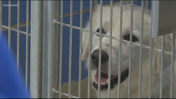 Nearly 100 animals came into the Austin Animal Center the day after Fourth of July