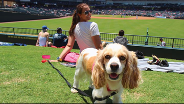 Round Rock Express home games where you can bring dogs, support 'school drives' and 'community awareness nights'