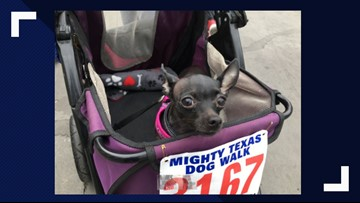 Hundreds of pups take part in Mighty Texas Dog Walk