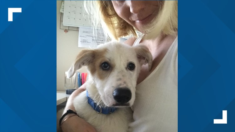 Austin Pets Alive! exceeds goal to save at-risk pups