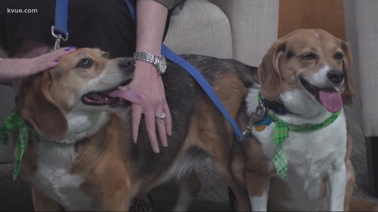 Pet of the Week: Meet Sunshine and Bumpkin