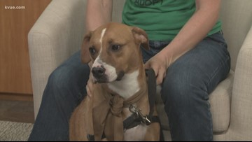 Pet of the Week: Meet Kilo