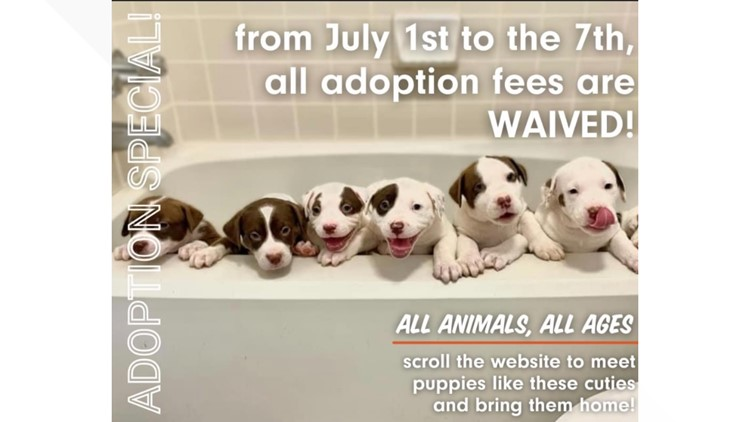 Austin Pets Alive! waiving adoption fees through July 7