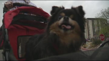 Good boys and girls at 20th annual Mighty Texas Dog Walk