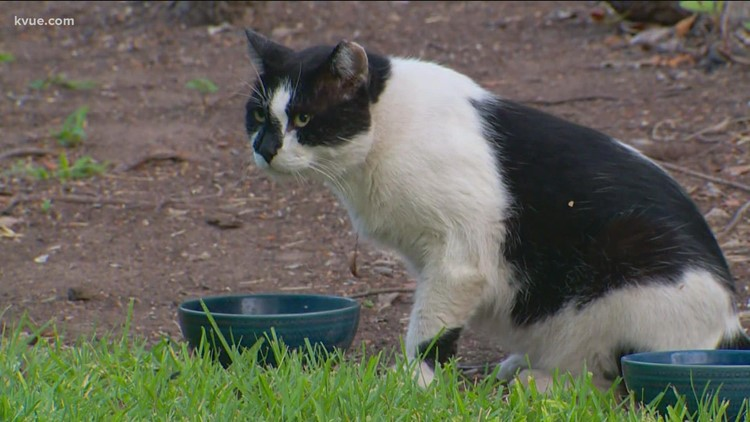 UT Austin community cares for campus cat after landscaping removes his home