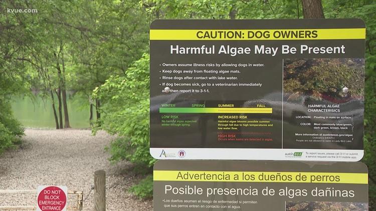 Toxic algae arrives early in Central Texas