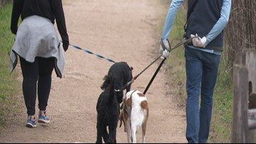 Off-leash dogs are top complaint from park users, says Austin Parks and Rec