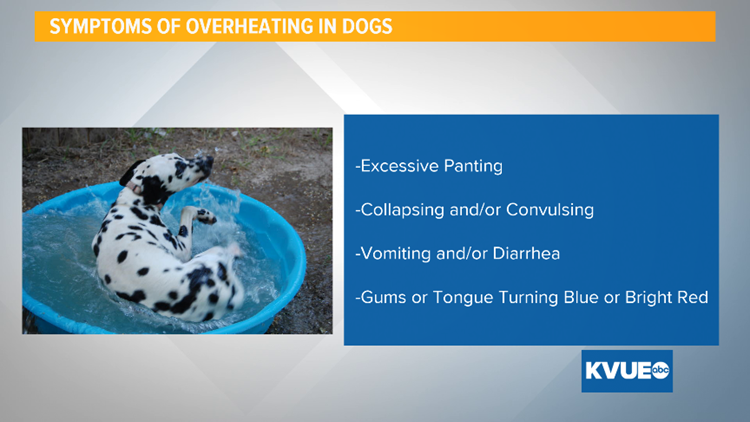 overheating in dogs