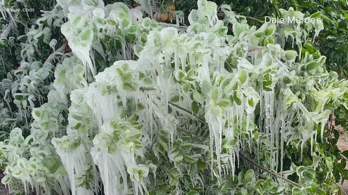 Farmers suffer devastating losses from winter storms