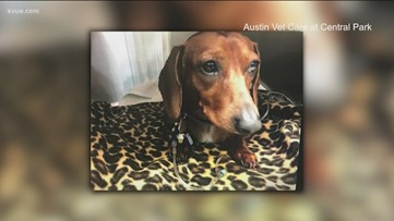 Austin vet clinic looking for missing dog