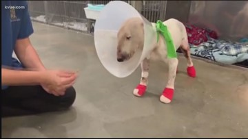 More than $8,000 raised for dragged dog
