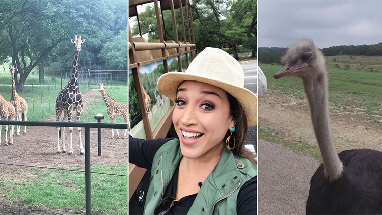 See hundreds of wild animals at this drive-thru safari in Texas