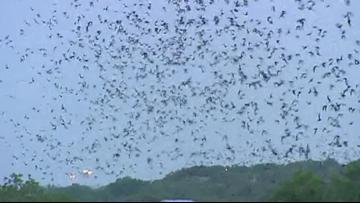 Deadly white-nose syndrome found in Texas bat