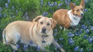 How to find a lost pet in Austin during the Fourth of July holiday