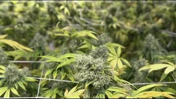 Live: Austin council members to discuss decriminalizing marijuana
