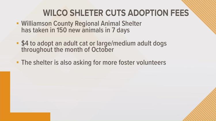 Williamson County Animal Shelter cuts adoption fees amid surge
