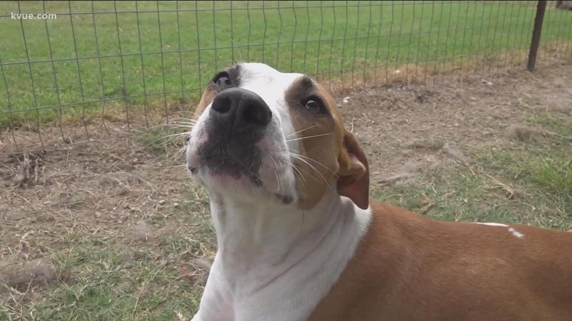 Pet of the Week: Meet Milla