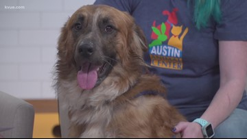 Pet of the Week: Meet Suzy