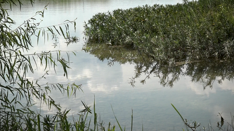 100,000 gallons of wastewater overflows at Walnut Creek Metropolitan Park