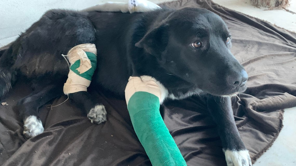 Austin Pets Alive! takes in dog left for dead ahead of severe storms