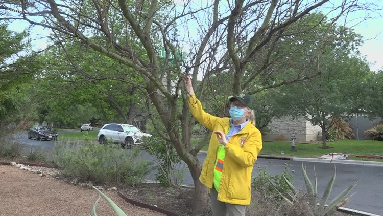 Think your trees are dead after winter storm? Arborists have advice