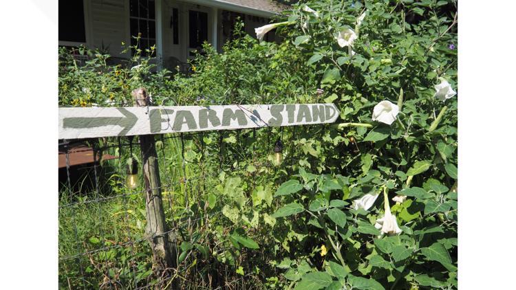 Keep Austin Local: Boggy Creek Farm