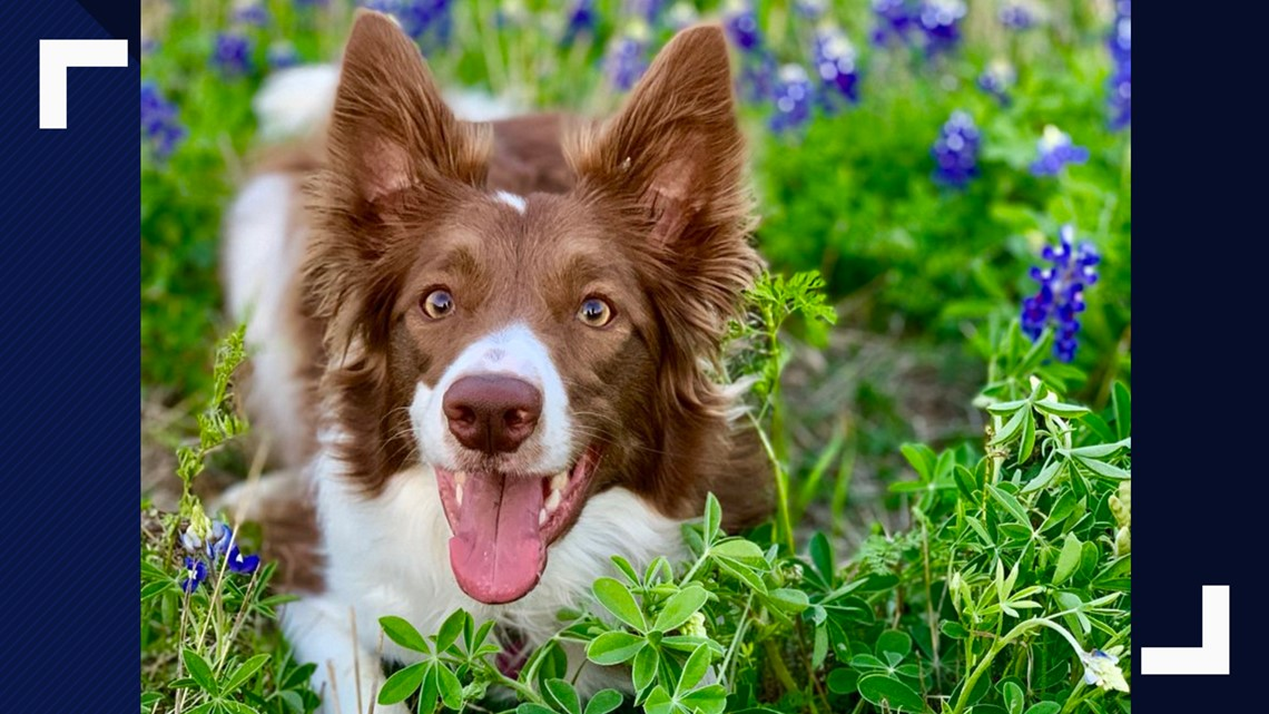 Today's National Pet Day. Here's a look at the cutest Austin area pets