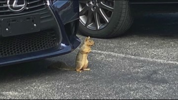 On National Squirrel Appreciation Day, we honor our resident KVUE squirrels
