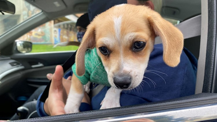 Austin Animal Center reopens, asking urgently for adopters