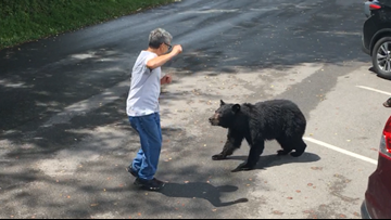 A park visitor confronted a momma bear and her cubs, so she charged