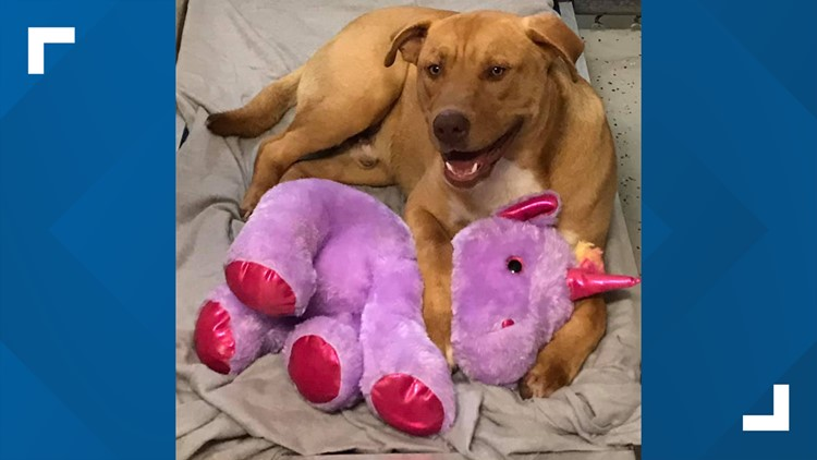 Stray dog who kept stealing purple unicorn from Dollar General finds forever home