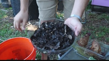 53,000 new Austin households will receive Curbside Composting Collection