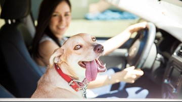 Put the car in bark: Uber tests 'Uber Pet' feature in Austin